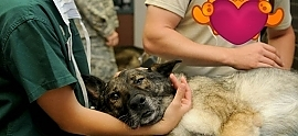 10 Veterinary Marketing Tips For Your Clinic