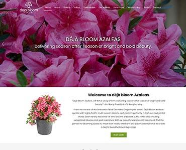 Deja Bloom Azaleas
